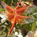 dragonflyJuly2011