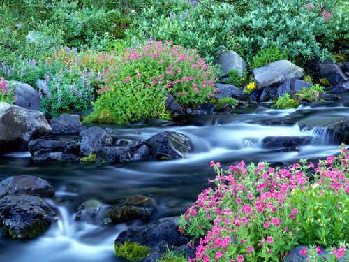 paradise river surrounded by spring flowers mt- rainier national park washington.jpg