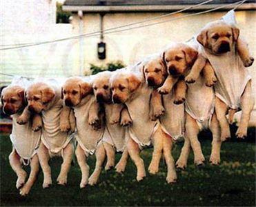 2008 11 25 puppies