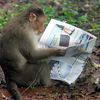 monkey wideweb  470x353,0