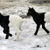 cute funny animals 03