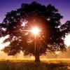 sun in tree