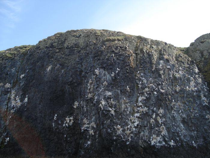 sjóferð, júlí og fl 2009 010
