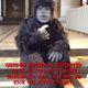 gordon brown is a gorilla