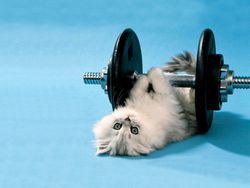 baby-kitty-lifting-weights