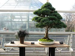 brooklyn-bonsai_03.jpg