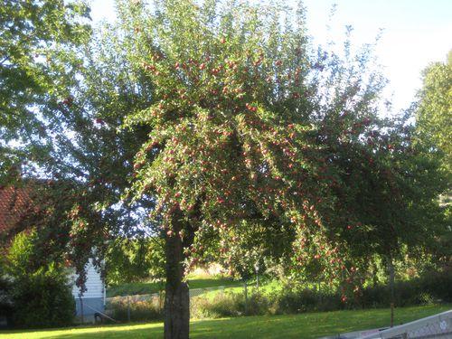 ulvøya sept 2009 009