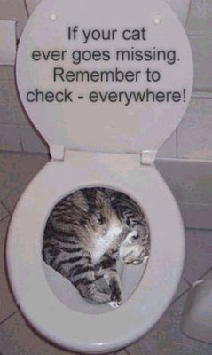 domestic-pet-missing-cat-sleeping-in-toilet-bowl