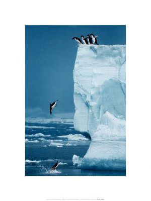6445019~Penguins-Diving-Off-Iceberg-Posters