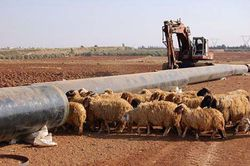 gas_pipeline-construction-syria-sheep.jpg