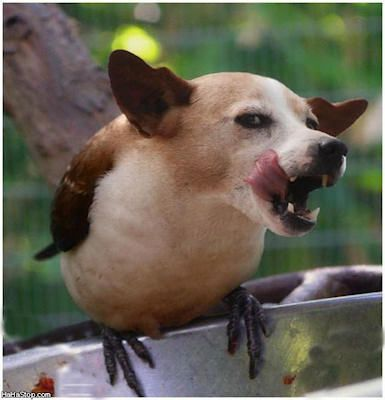 this dog thinks it is a bird lets see the idiot fly