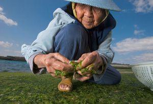 woman-seaweed-615.jpg