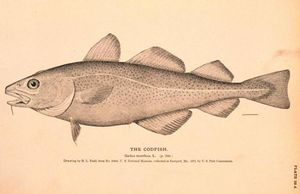 Cod(NOAA_pic_for_index)