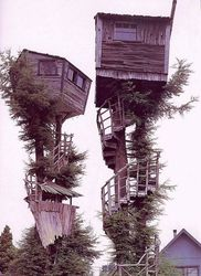 insane_tree_house