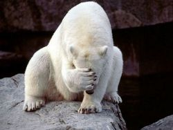 polar_bear_failure