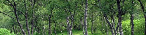 blog greentrees purdy.jpg