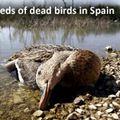 dead-birds-spain