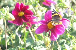 flowers_and_butterfly_copy.jpg