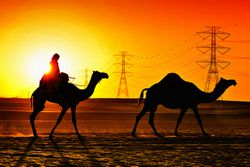 camels_electricity-lines.jpg