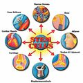 Stem Cell Education - (2)