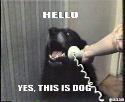 hello-yes-this-is-dog
