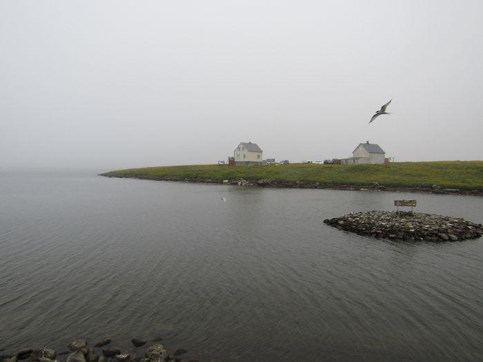 Harðbakur
