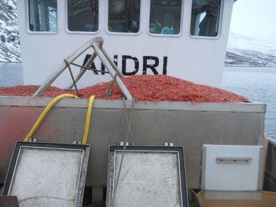 Margt Noregur Island 059
