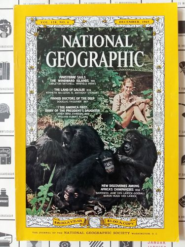 ng jg1965 chimpanzees.jpg